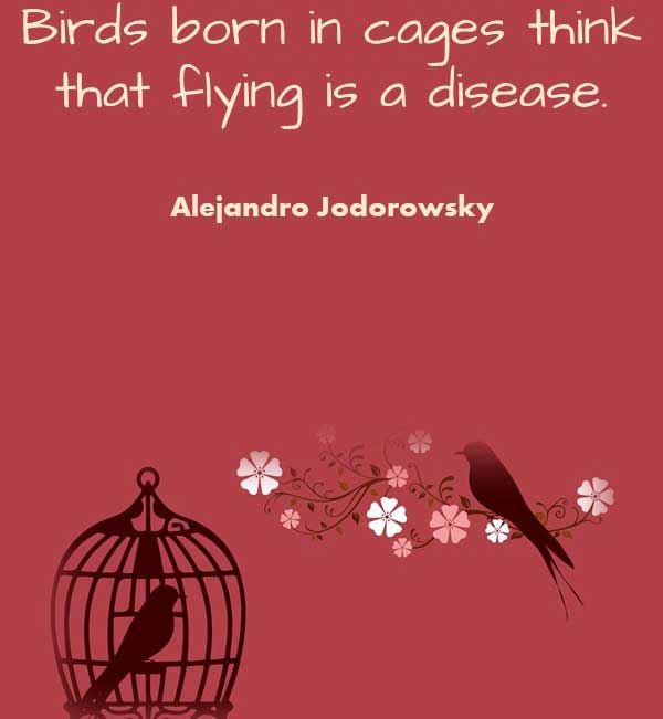 Philosophy quote by Alejandro Jodorowsky that says Birds born in cages think that flying is a disease
