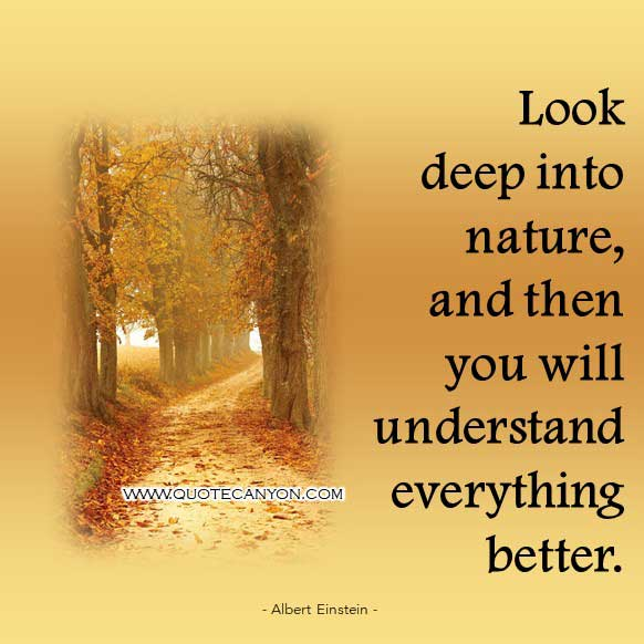 Albert Einstein Nature Quote that says Look deep into nature, and then you will understand everything better