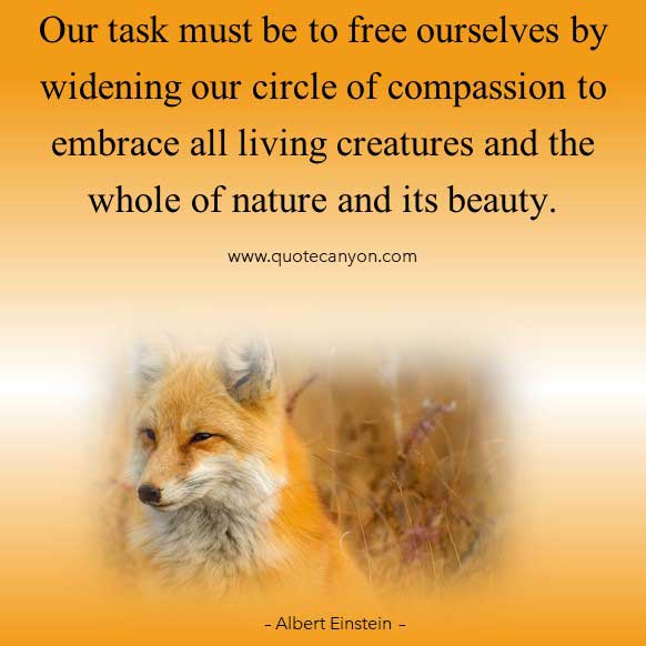 Albert Einstein Nature Quotes that says Our task must be to free ourselves by widening our circle of compassion to embrace all living creatures and the whole of nature and its beauty
